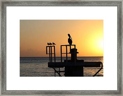 Pelican And Friend Framed Print by Rebecca Cozart
