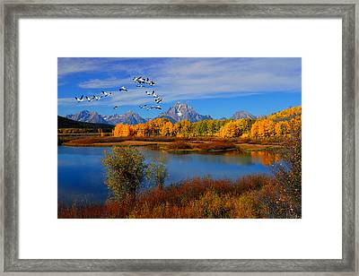 Pelican Formation Framed Print by Greg Norrell