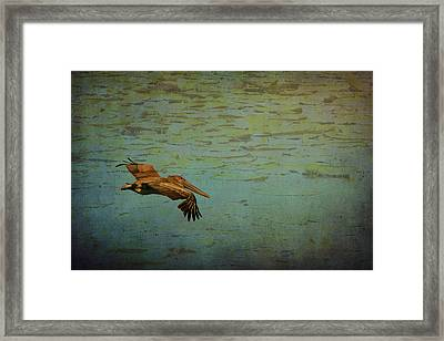 Pelican Gliding Above The Lily Pond  Framed Print by Carla Parris