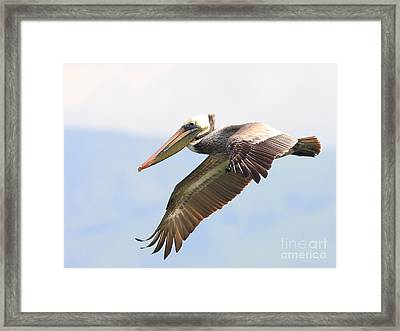 Pelican In The Sky Framed Print by Wingsdomain Art and Photography