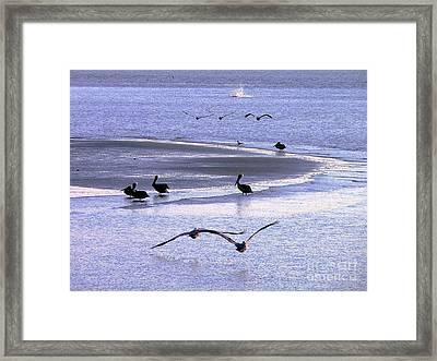 Pelican Island Framed Print by Al Powell Photography USA