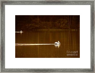 Pelican Landing Framed Print by Tamyra Ayles
