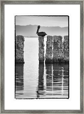 Pelican Perch II Framed Print by Linda Dunn