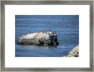 Pelican Rock Framed Print by Randy Bayne