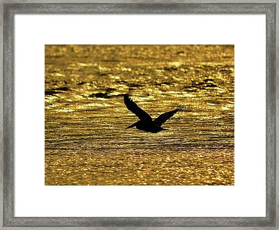 Pelican Silhouette - Golden Gulf Framed Print by Al Powell Photography USA