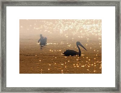 Pelican Sunrise Framed Print by Mike  Dawson