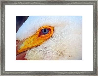 Pelican's Eye Framed Print by Marty Koch