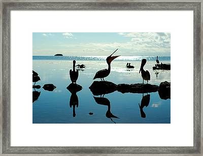 Pelicans Key West Framed Print by Tim DeMasters