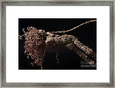 Pellucid Moment Detail  Framed Print by Adam Long
