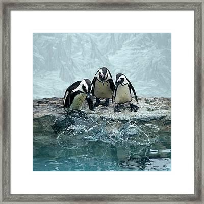 Penguins Framed Print by Fotografias de Rodolfo Velasco