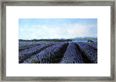 Penn Cove Lavender Framed Print by Perry Woodfin