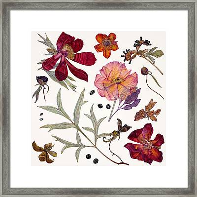 Peony Specimens Framed Print by Rachel Pedder-Smith