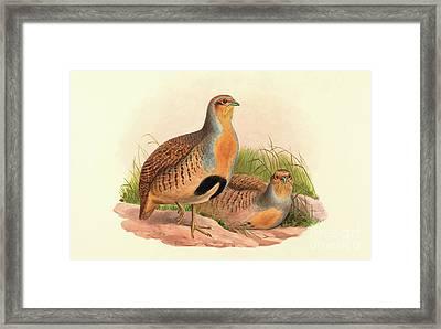 Perdix Barbata, Daurian Partridge Framed Print by John Gould