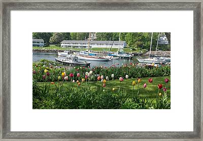 Perkins Cove Tulips Framed Print by Joseph Smith