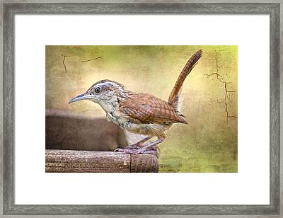 Perky Little Wren Framed Print by Bonnie Barry