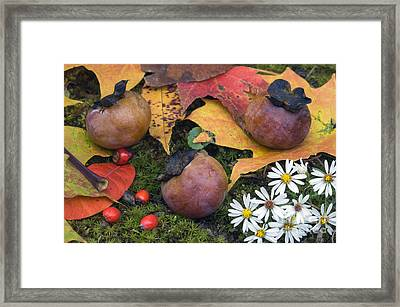 Persimmons - D009738 Framed Print by Daniel Dempster