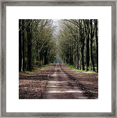 Perspective Framed Print by Roberto Alamino