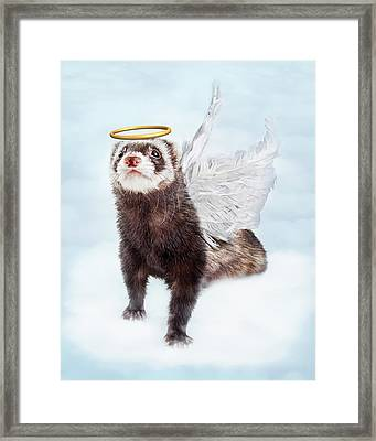 Pet Ferret Angel In Clouds Framed Print by Susan Schmitz