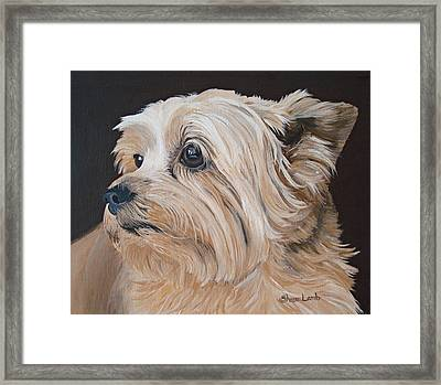 Pet Portrait Painting Commission Cairn Terrier Framed Print by Sharon  Lamb