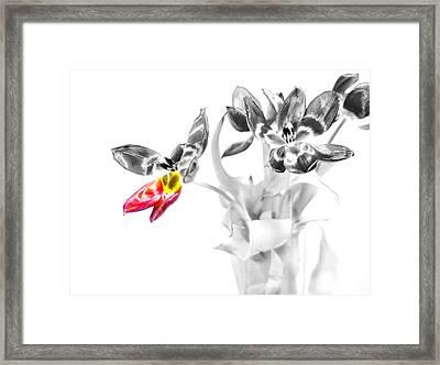 Petal Wings Fly Framed Print by Diana Angstadt