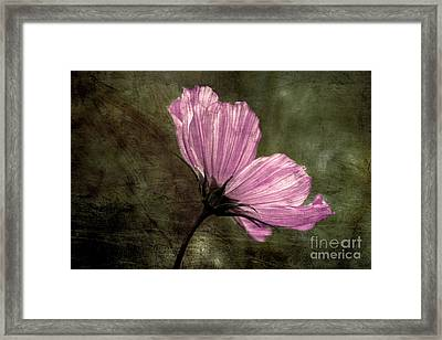 Petalia - V33at01 Framed Print by Variance Collections