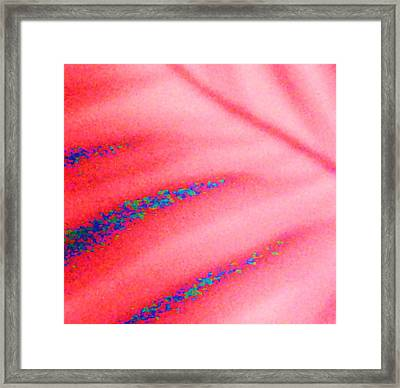 Petals And Pebbles  Framed Print by Anne-Elizabeth Whiteway
