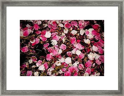 Petals Framed Print by Hsin Tseng