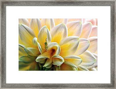Petals 'n' Patterns Framed Print by Kaye Menner