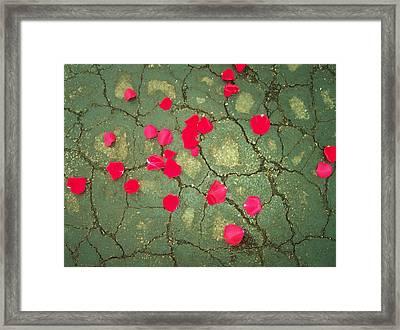 Petals On Asphalt Framed Print by Anna Villarreal Garbis