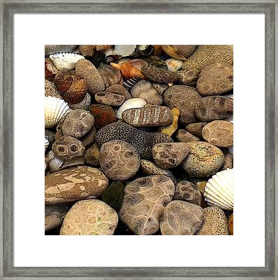 Petoskey Stones With Shells L Framed Print by Michelle Calkins