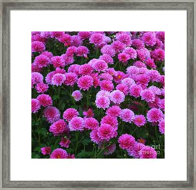 Pflower Framed Print by SK Pfphotography