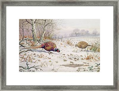 Pheasant And Partridge Eating  Framed Print by Carl Donner