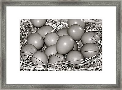 Pheasant Eggs Framed Print by Karon Melillo DeVega
