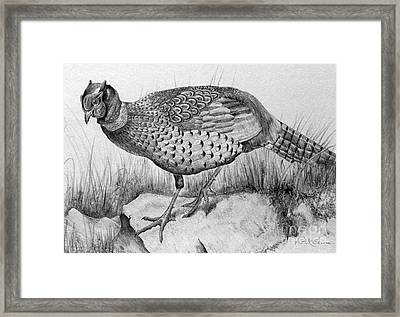 Pheasant In The Wild Framed Print by Roy Anthony Kaelin