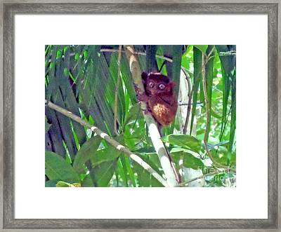Philippine Tarsier Framed Print by Kay Novy