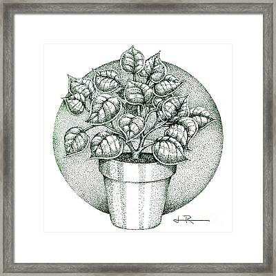 Philodendron 2  Framed Print by Jim Rehlin