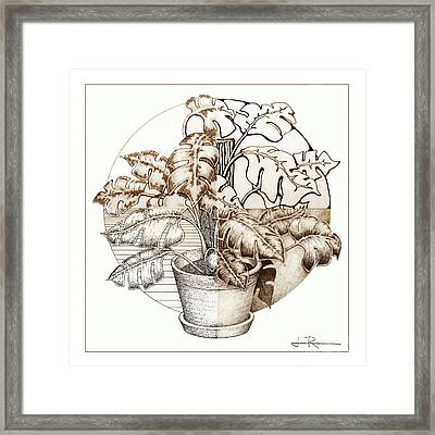 Philodendron 4 Framed Print by Jim Rehlin