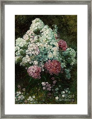 Phlox Framed Print by David Johnson