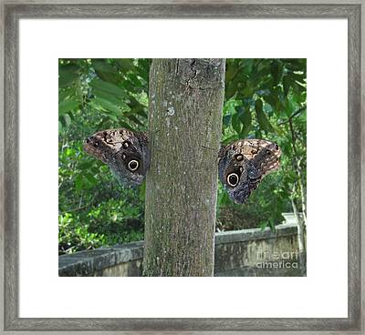 Photography Of Butterfly Symmetry Framed Print by Mario  Perez