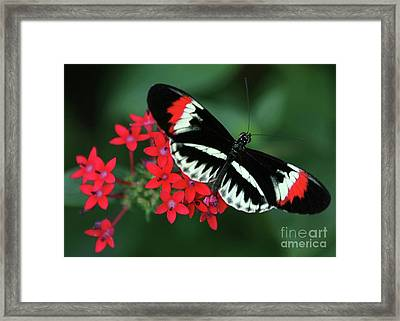 Piano Key Butterfly Framed Print by Sabrina L Ryan