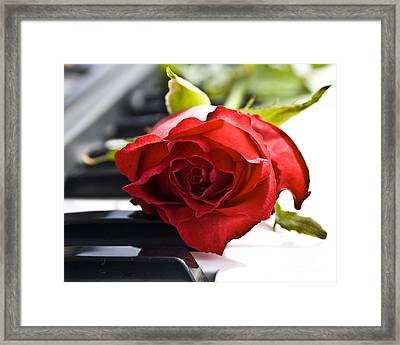 Piano Rose Framed Print by Sophie De Roumanie