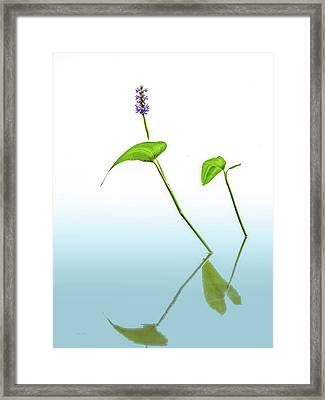 Pickerelweed In The Mist Framed Print by Bob Orsillo