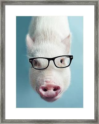 Pickle The Pig I Framed Print by Eli Warren