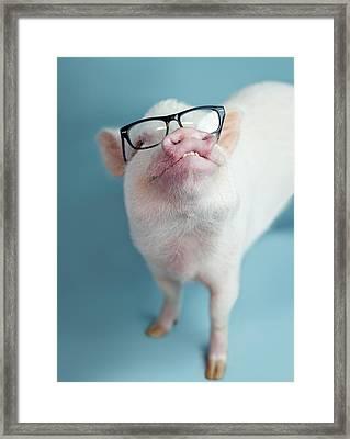 Pickle The Pig II Framed Print by Eli Warren