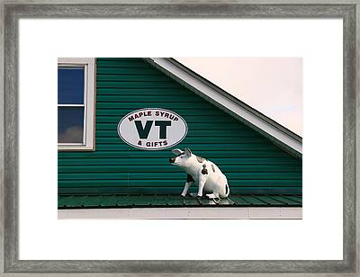 Pig On A Hot Tin Roof Framed Print by Allen Beatty