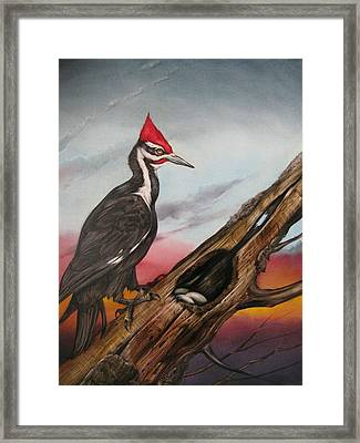 Pileated Woodpecker Framed Print by Martin Katon