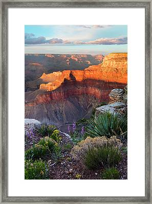 Pima Point Bloom  Framed Print by Mike Buchheit