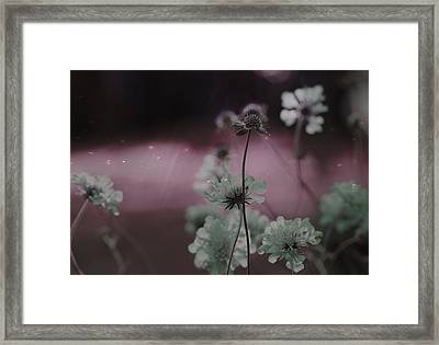 Pincushion Invasion  Framed Print by Gothicolors Donna Snyder