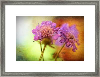 Pincushion Pair Framed Print by Bonnie Bruno