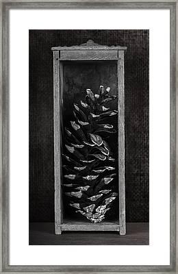 Pine Cone In A Box Still Life Framed Print by Tom Mc Nemar